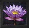 Water Lily Tile Box